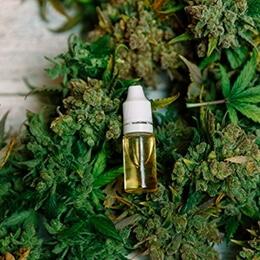 medicinske cannabisfrø og frø med højt indhold af CBD