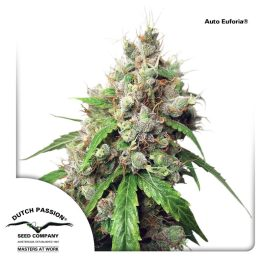 AutoEuforia-Dutch-Passion cannabisfrø