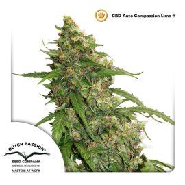 CBD-Auto-compassion-lime-dutch-passion CBD cannabisfrø
