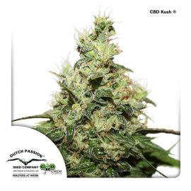 CBD-Kush-Dutch-Passion CBD cannabisfrø