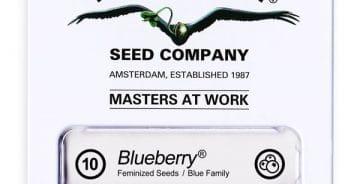 cannabisfrø-Blueberry-Dutch-Passion