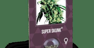 Cannabisfrø Sensi Seeds Super Skunk 6