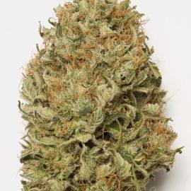 Cannabisfrø Blue Dream Auto HSO