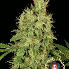 Cannabisfrø CBD Chronic Serious Seeds