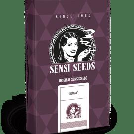 Cannabisfrø Sensi Seeds Durban Feminiserede