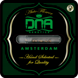 Cannabisfrø pakke DNA Genetics Auto