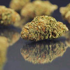 Medicinsk cannabisfrø Cannatonic