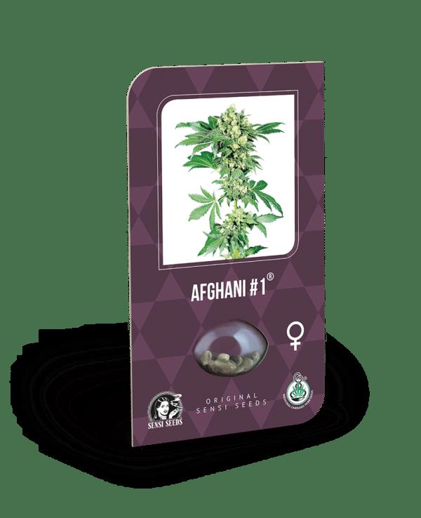 Sensi Seeds Cannabisfrø afghani-feminiserede2