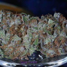 Skunkfrø Deep Purple regulære cannabisfrø TGA Subcool