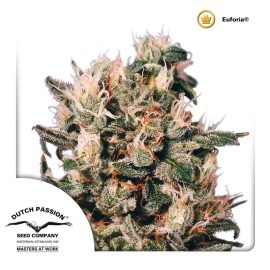 cannabisfrø-Euforia-Dutch-Passion