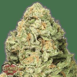 cannabisfrø Fruit Punch F-1