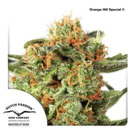cannabisfrø-Orange-Hill-Special-Dutch-Passion