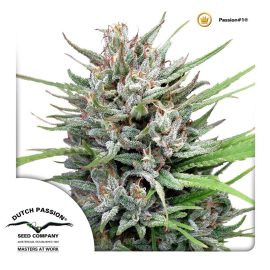 cannabisfrø-Passion1-Dutch-Passion