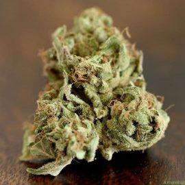 Cannabisfrø Fallen Angel Devils Harvest (3)