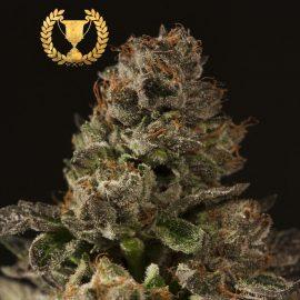Cannabisfrø Strawberry Sour Diesel Devils Harvest (2)