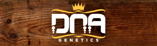 Promotion på cannabisfrø fra DNA Genetics