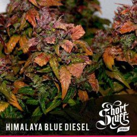 Auto Cannabisfrø Humalaya Blue Diesel Short Stuff (2)