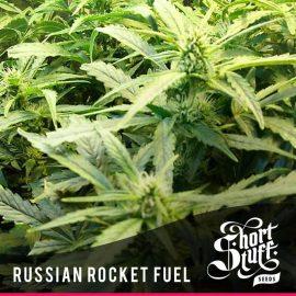 Auto Cannabisfrø Russian Rocket Fuel Short Stuff