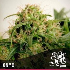 Cannabisfrø Auto Onyx Short Stuff