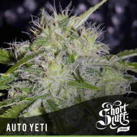 Cannabisfrø Auto Yeti Short Stuff