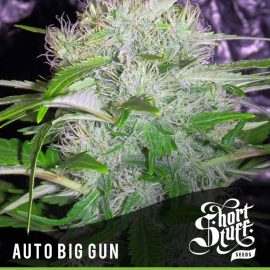Cannabisfrø Auto Big Gun Short Stuff