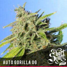 Cannabisfrø Auto Gorilla OG Short Stuff