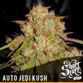 Cannabisfrø Auto Jedi Kush Short Stuff