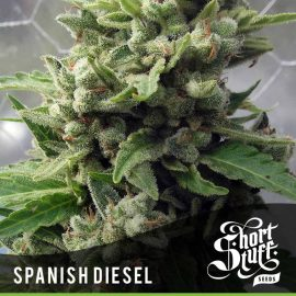 Cannabisfrø Auto Spanish Diesel Short Stuff