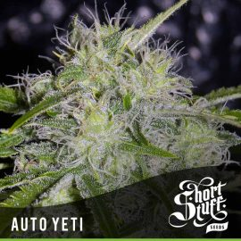 Cannabisfrø Auto Yeti Short Stuff