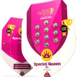 Udendørs cannabisfrø Special Queen 1 Royal Queen Seeds