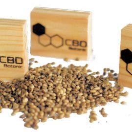 Medicinsk cannabis frø CBD Botanic pakker