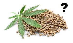 hvad er forskellen på skunkfrø og cannabisfrø