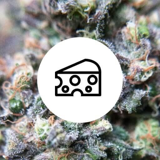 Skunkfrø cannabisfrø stærk duft