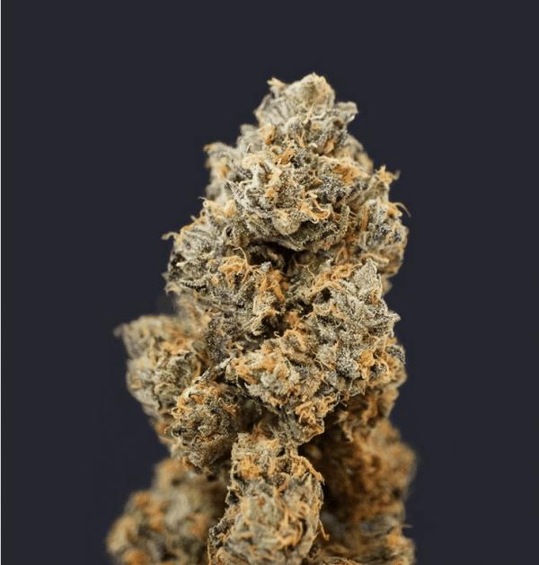 Skunkfrø French Macaron Feminiserede Cannabisfrø TH Seeds