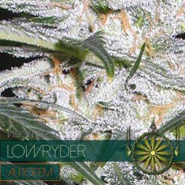 Skunkfrø Lowryder autoblomstrende cannabisfrø Vision Seeds