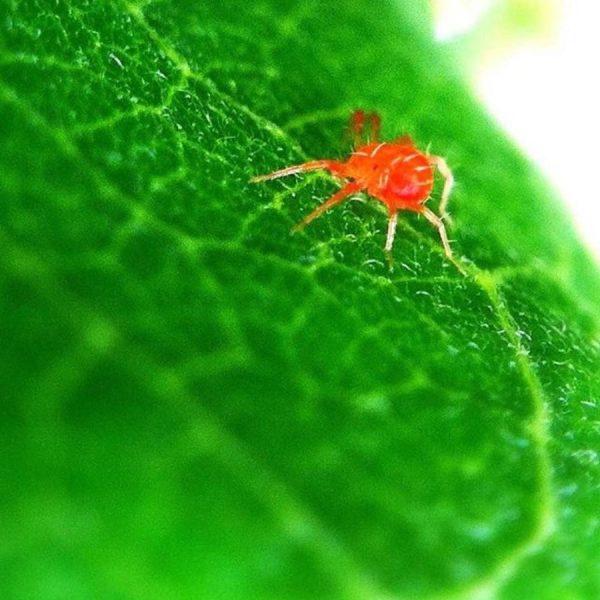 Spindemide Plant Vitality Plus