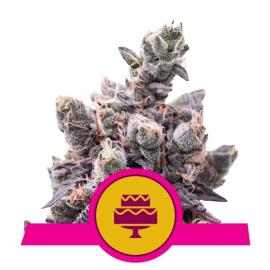 Wedding Gelato Royal Queen Cannabisfrø Skunkfrø
