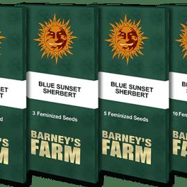BLUE SUNSET SHERBERT Barneys Farm Cannabisfrø Skunkfrø